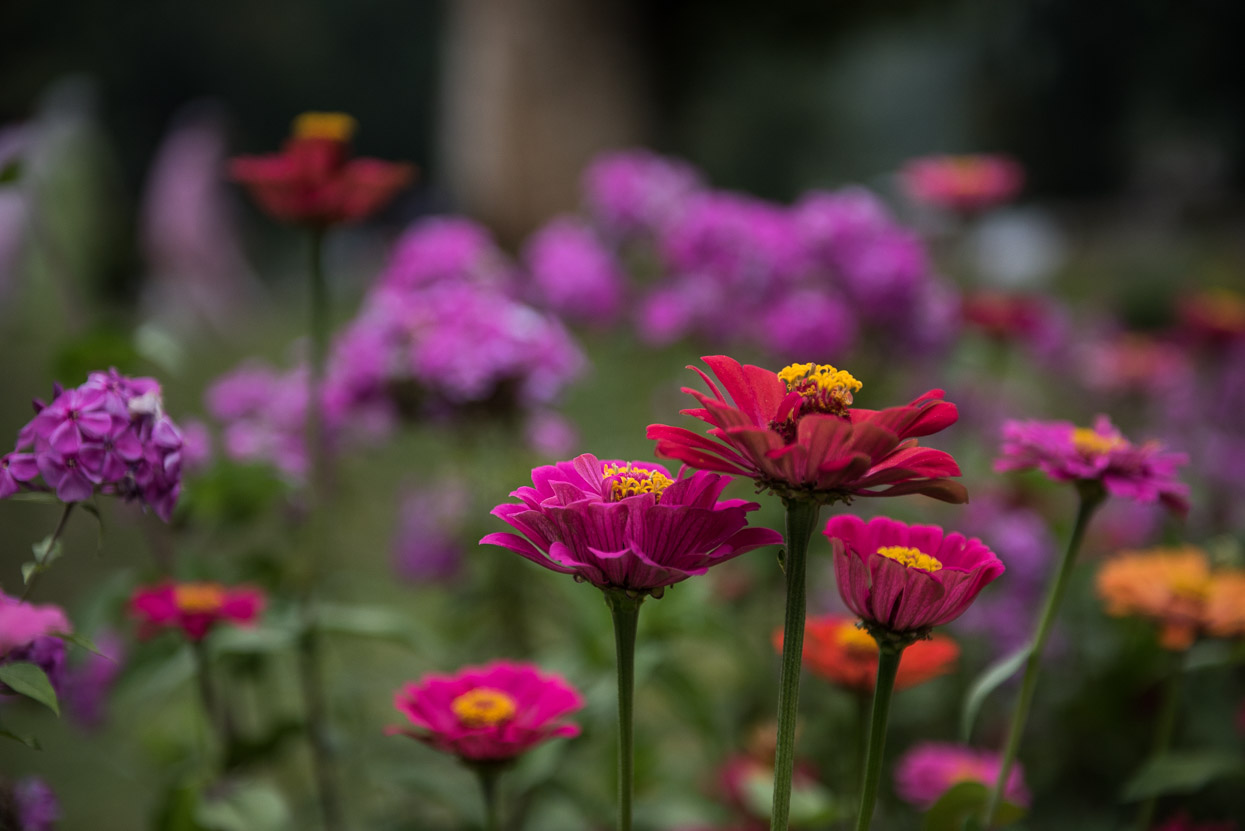 flowers park srinagar kashmir