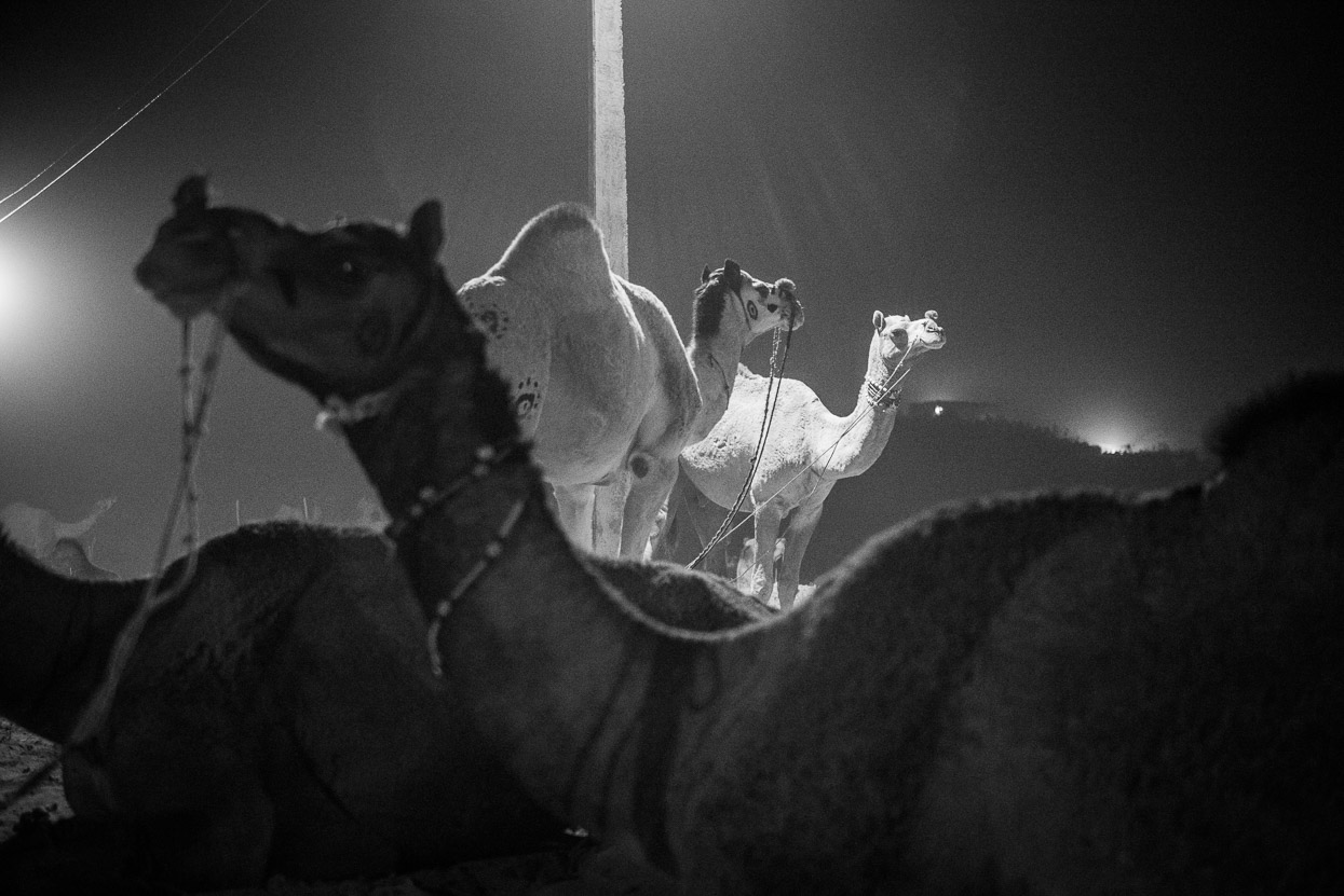 pushkar camel fair at night