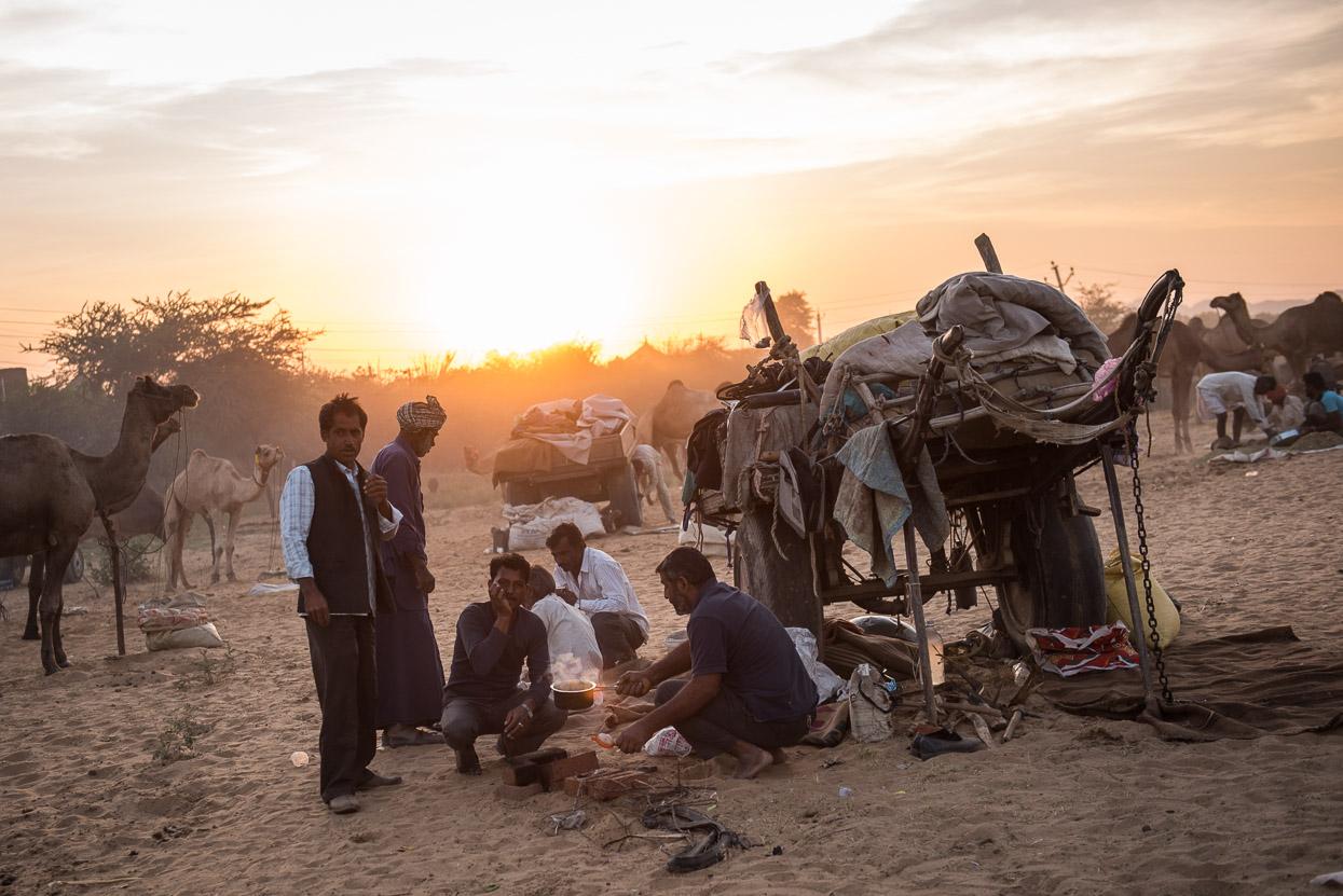 Camp at pushkar camel fair at sunset