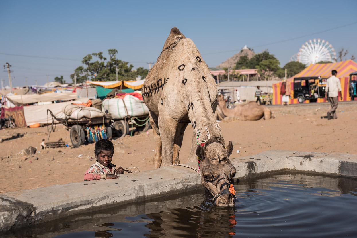 boy with camel