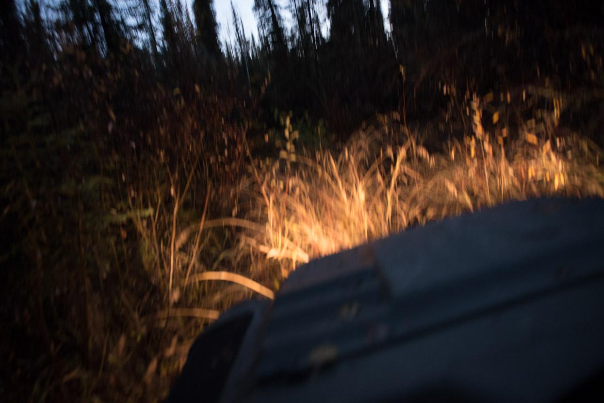 Argo driving at night